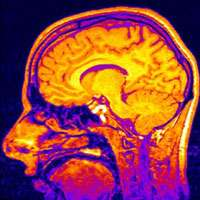 Love: it's all the same to the brain