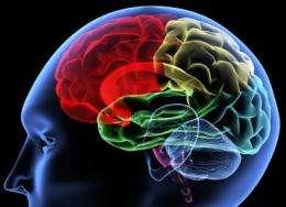 Magnesium supplement helps boost brainpower