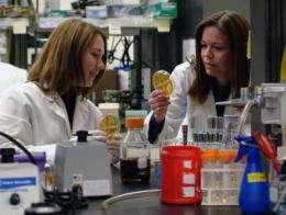 Mineral studies advance antibacterial alternatives