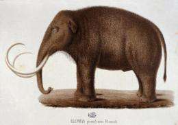 More than 80% of all mammoth finds have been dug up in eastern Siberia