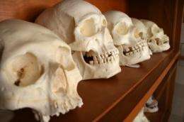 New forensics research will help identify remains of children