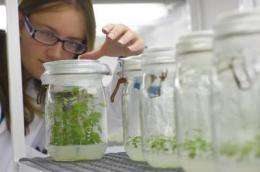 New genetic map will speed up plant breeding of the world's most important medicinal crop