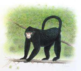 New snub-nosed monkey discovered in Northern Myanmar