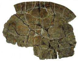 New thick-shelled turtle species lived with world's biggest snake