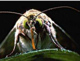 Oviposition behaviour of pest insects keeps Bt-cotton durably resistant