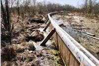 Peat bog restoration methods may harm insect species
