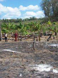 Policy changes needed to protect southeast Mexico's farmers, forests