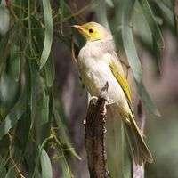 River declines now causing havoc in birdlife