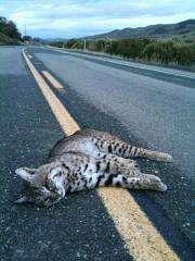 Roadkill studies on the rise