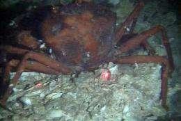 Scientist finds Gulf bottom still oily, dead (AP)