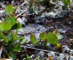 Shrubs are cool! They protect permafrost against climate change