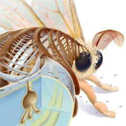 Silk moth's antenna inspires new nanotech tool with applications in Alzheimer's research