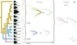 Simple math explains dramatic beak shape variation in Darwin's finches