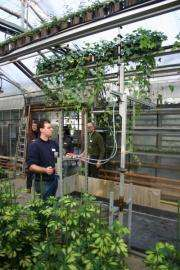 Spray application rate, equipment affect pest management in greenhouse ivy plants