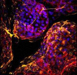 The world is not flat: Exploring cells and tissues in three dimensions
