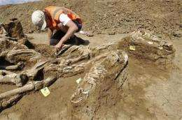 Unusual 17th-century Dutch horse burial site found (AP)