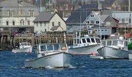 Virulent skin germ grates on Maine lobstering isle (AP)