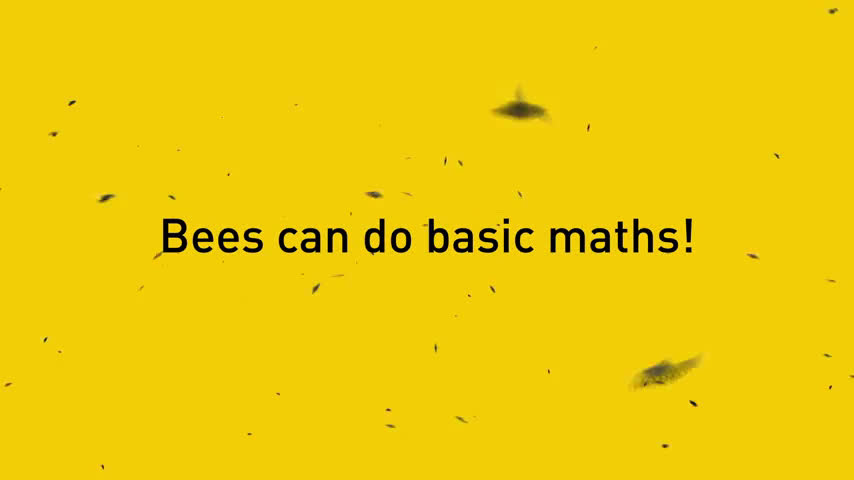 Bees have brains for basic math, study finds